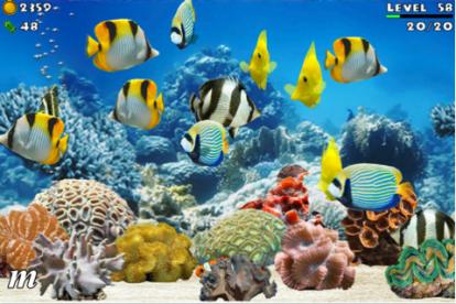 Fish farm un originale screensaver tutto da giocare sul for Comprare pesci