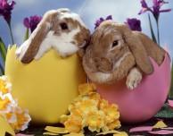 5 applicazioni per… la Pasqua