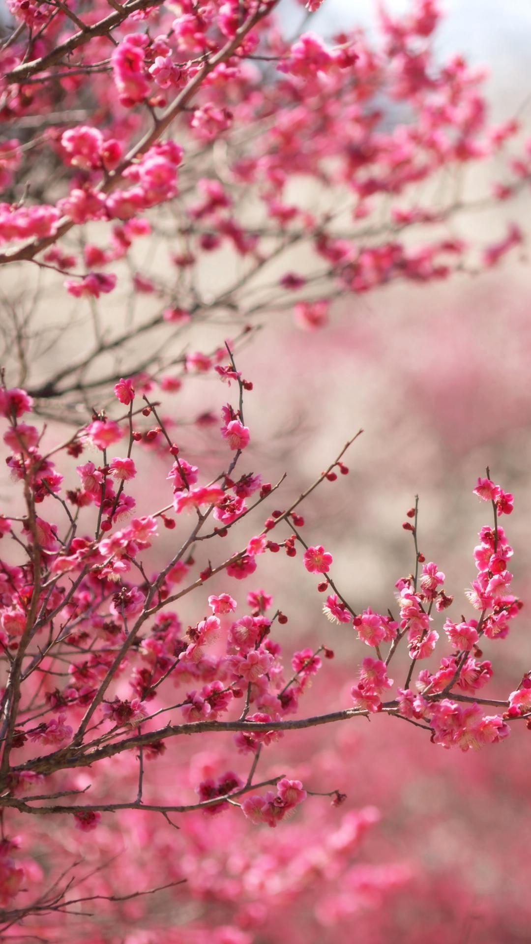 Sfondi iphone fiori rosa