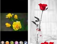 Total Image Effects, tanti effetti gratuiti per le tue foto