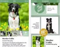 Microsoft: scatta una foto al cane e Fetch! svela di quale razza si tratta