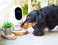 Pawbo+ consente di interagire con i propri animali domestici da remoto – IFA 2016