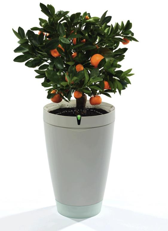 Parrot POT, il vaso smart che annaffia le piante grazie all'iPhone – IFA 2016