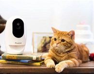 Pawbo+, la videocamera con dispenser di crocchette gestibile da iPhone