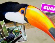 Versi Animali, Foto e Info: schede informative e giochi per bambini