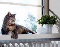 La videocamera Netatmo Welcome sempre più precisa: ora riconosce gli animali domestici