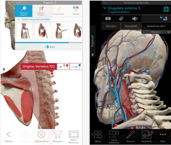 Atlante di anatomia umana edizione 2018