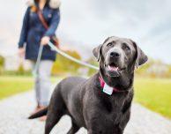Tractive, il localizzatore GPS per animali domestici